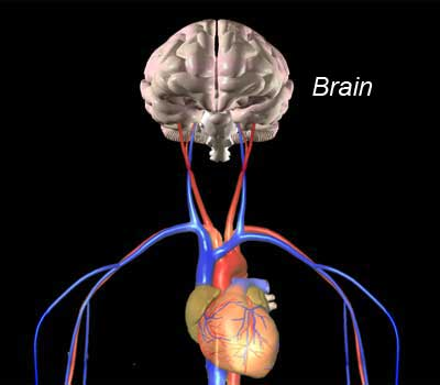 Imam, Seumpama Jantung dan Otak Manusia
